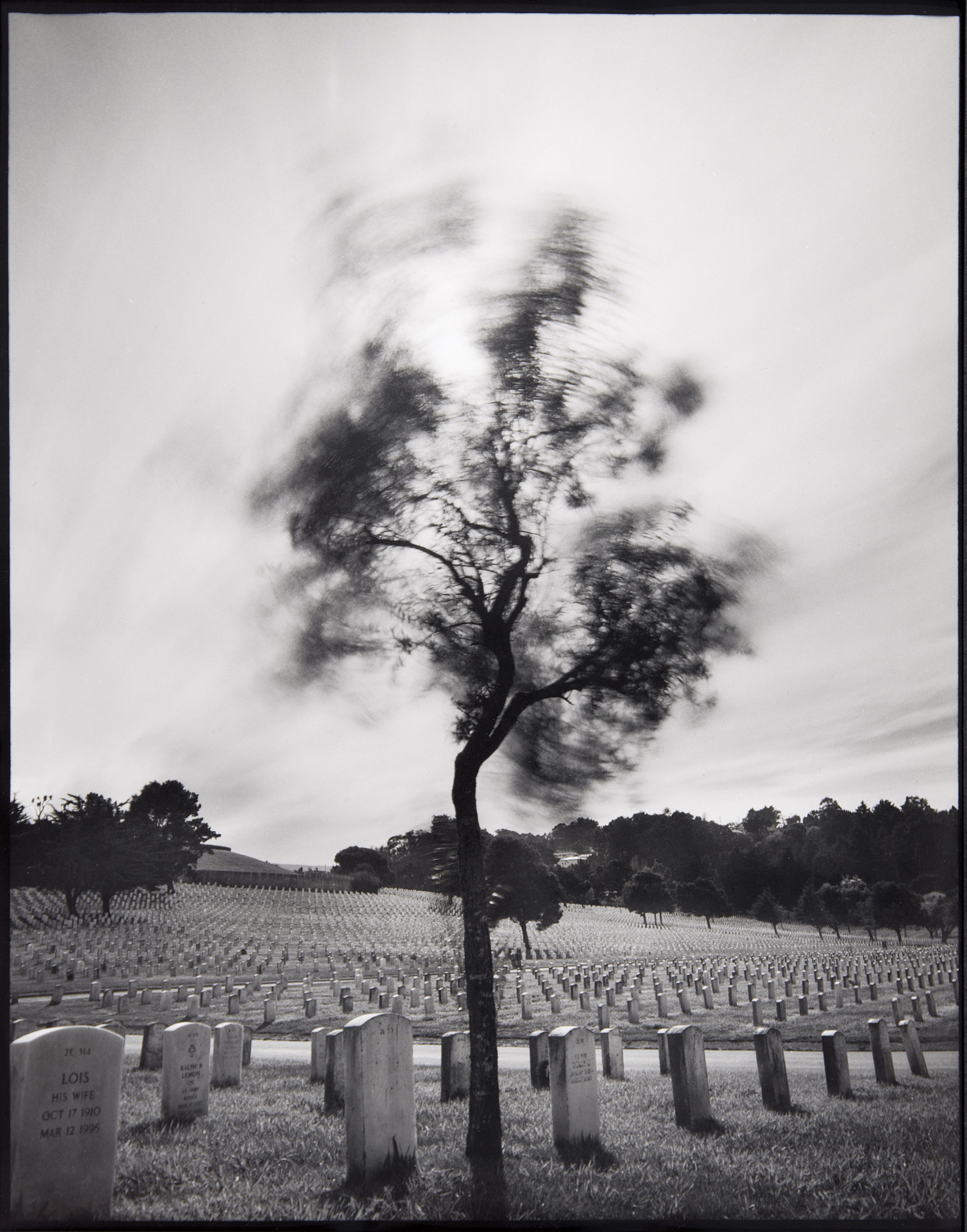 05-Tree.jpg