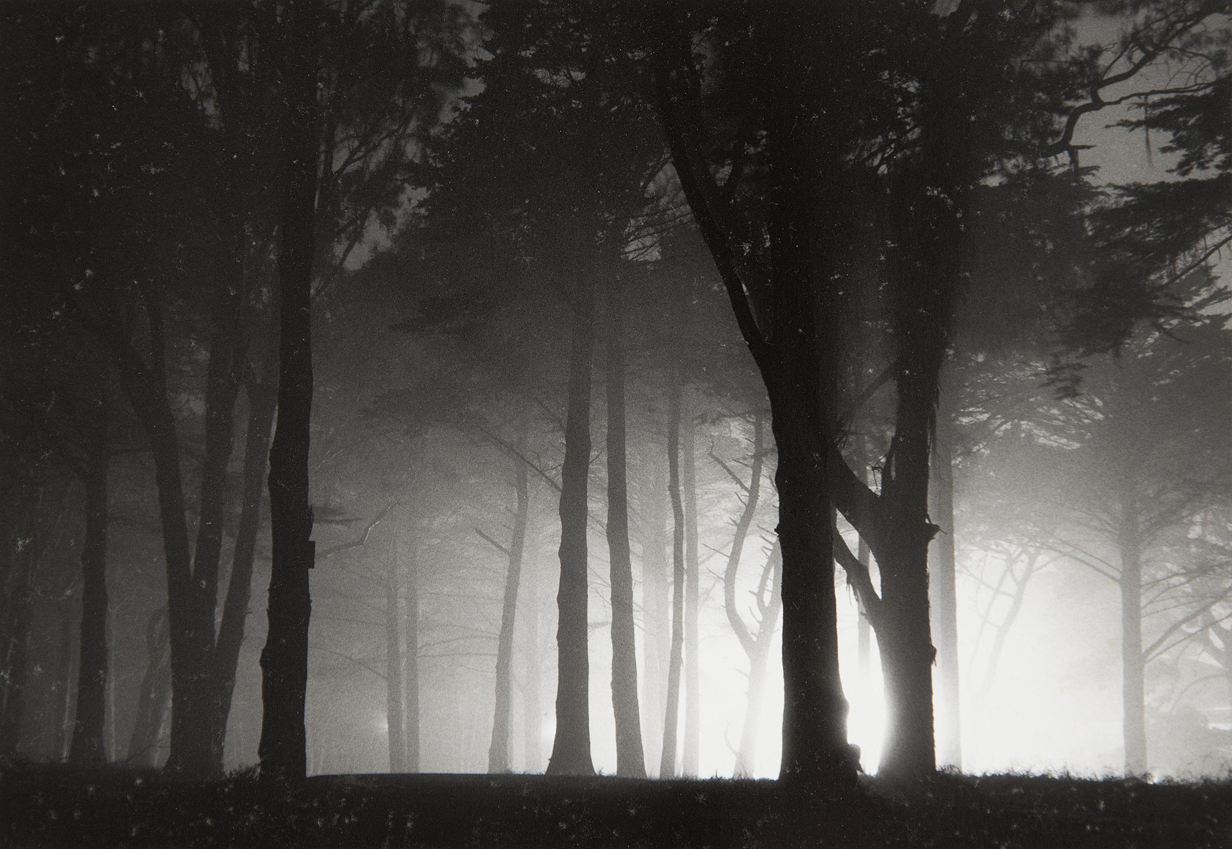 02-Woods2.jpg