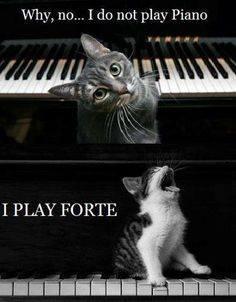 Piano Cat.jpg
