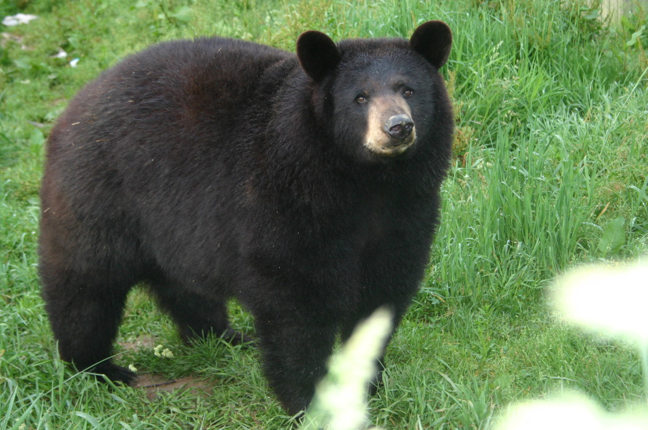 raxcaeli :      algerianbebe :      heychessikuh :      rootedinhope :      bearzerky :     this bear is perfect in every way like scientifically there is nothing wrong with him     what is the scientific definition of a perfect bear?     this is the scientific definition of a perfect bear     hey, don't mean to hurt anybody's feelins but this bear has a super small face     he has exactly as much face as he needs