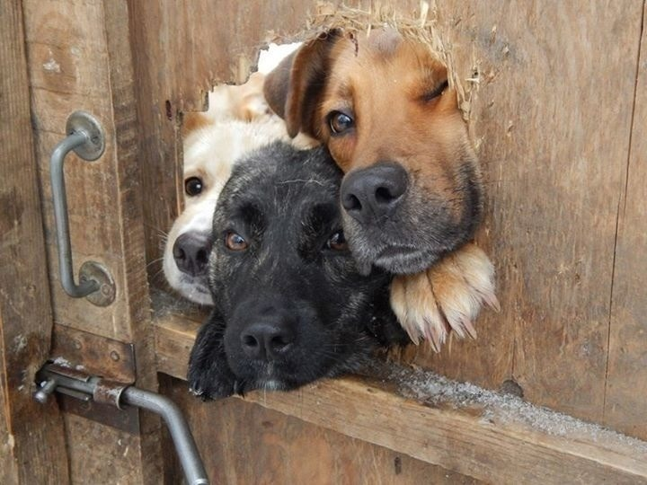 """corgisandboobs :   """"What's the password?"""" """"Is it… is it 'dog'?"""" *muffled meeting behind door* """"You may enter."""""""