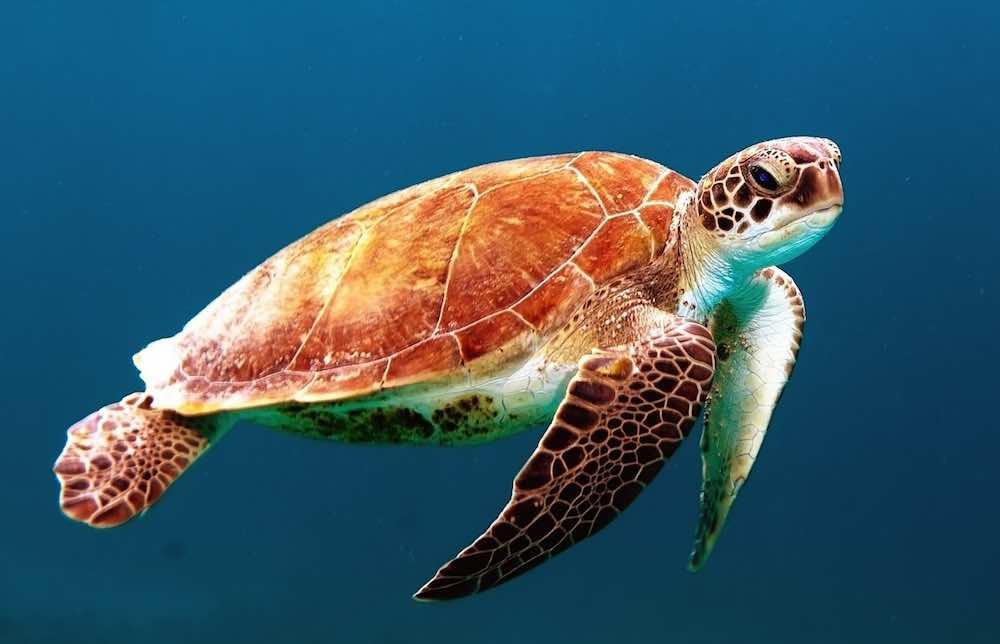 Turtle look.jpg