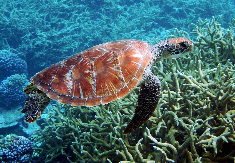 turtle coral.jpg.jpg