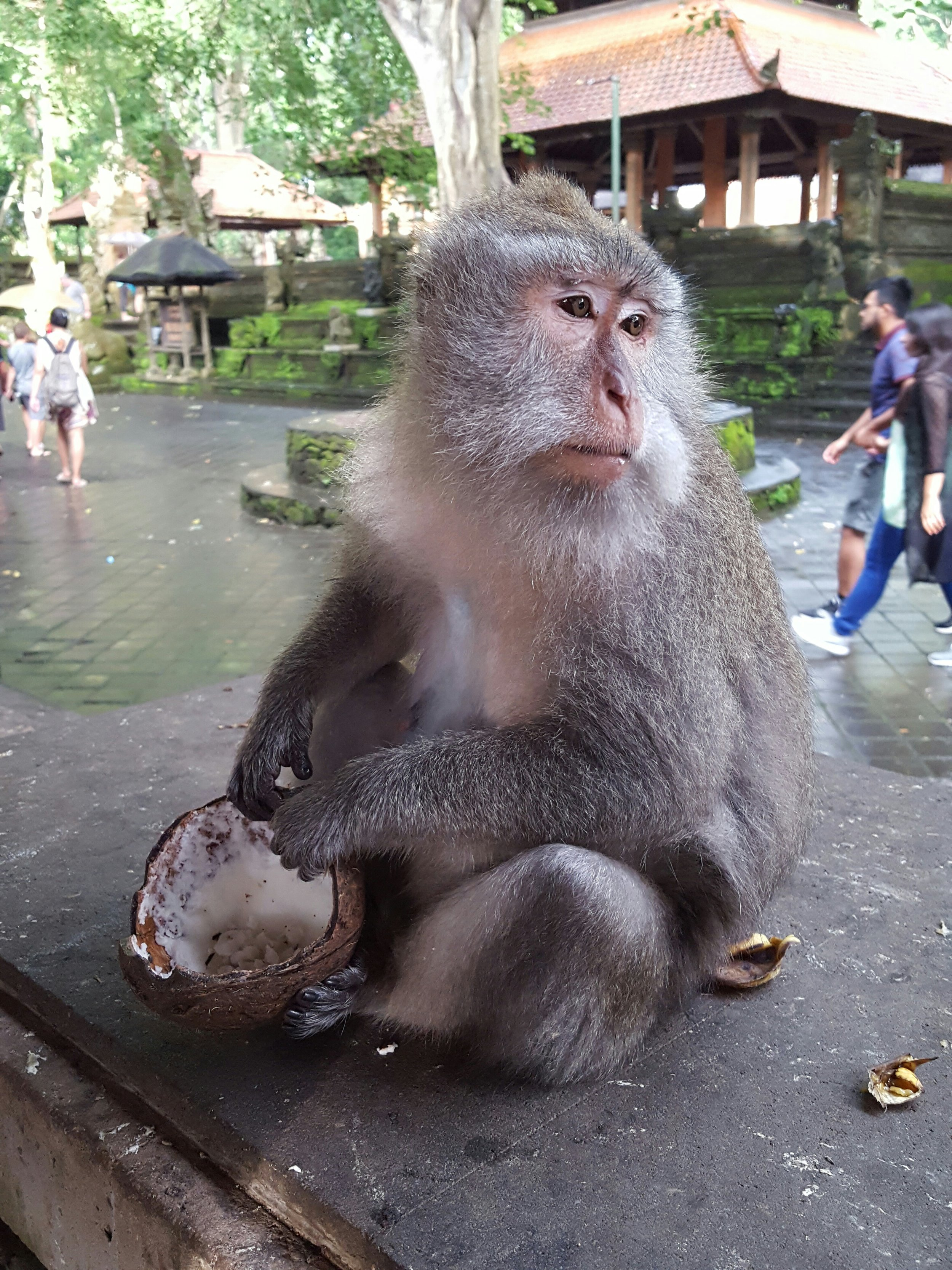 A protector of Monkey Forest