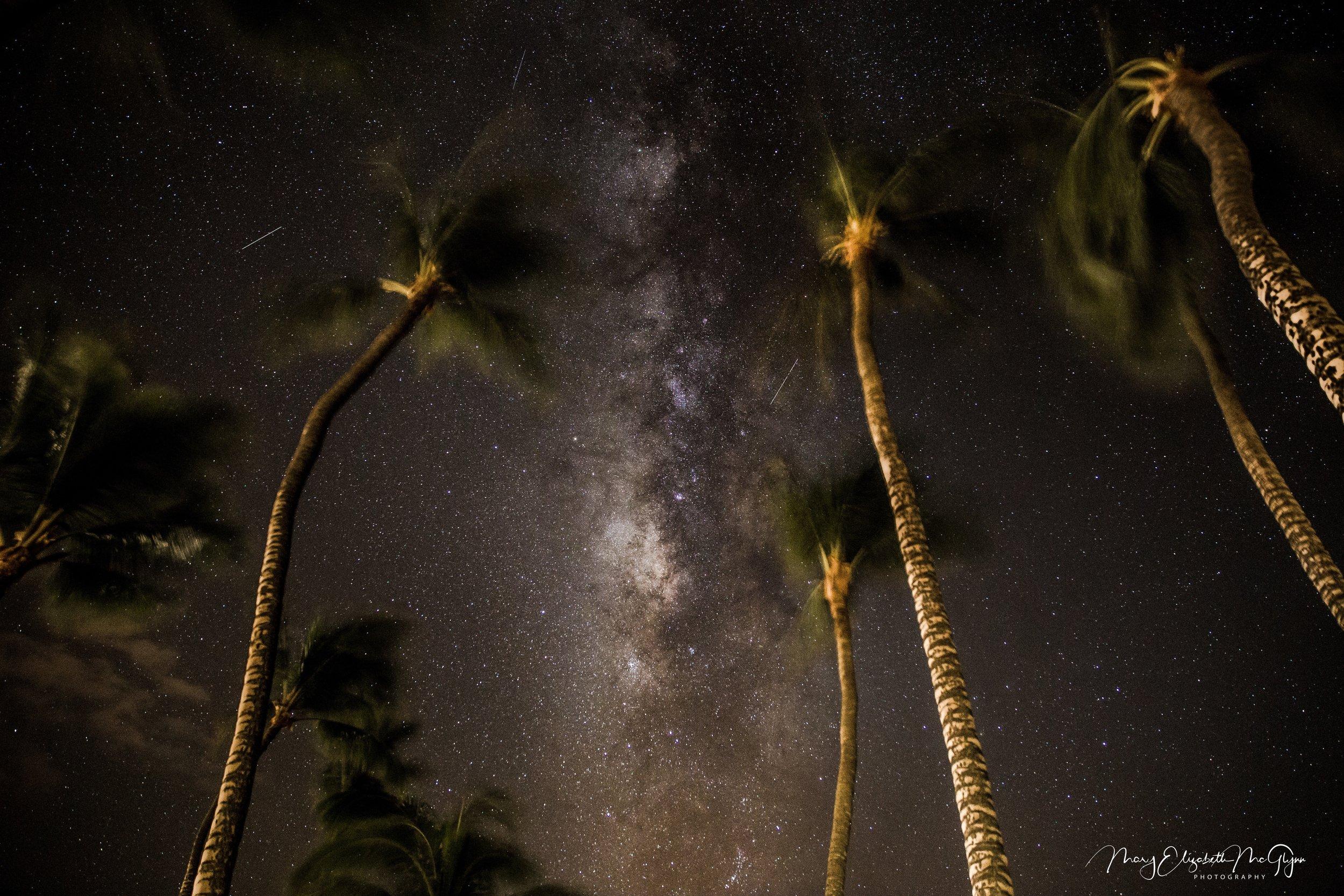 Mauna Lani Milky Palms (1).jpg