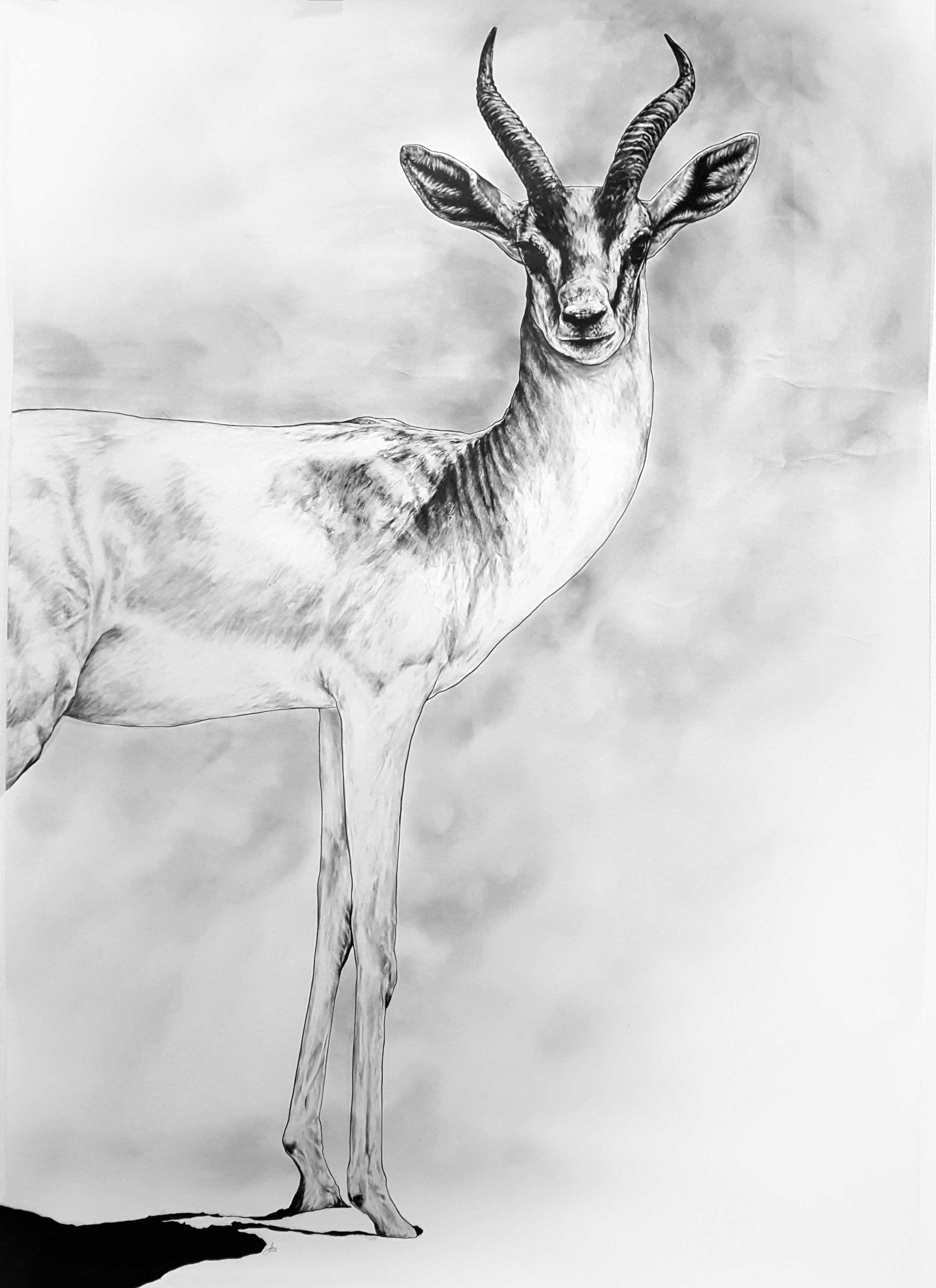 Gazelle. 2017-2018. Pencil on 300 GSM Fabriano Artistico Paper (140 x 120cm) AVAILABLE