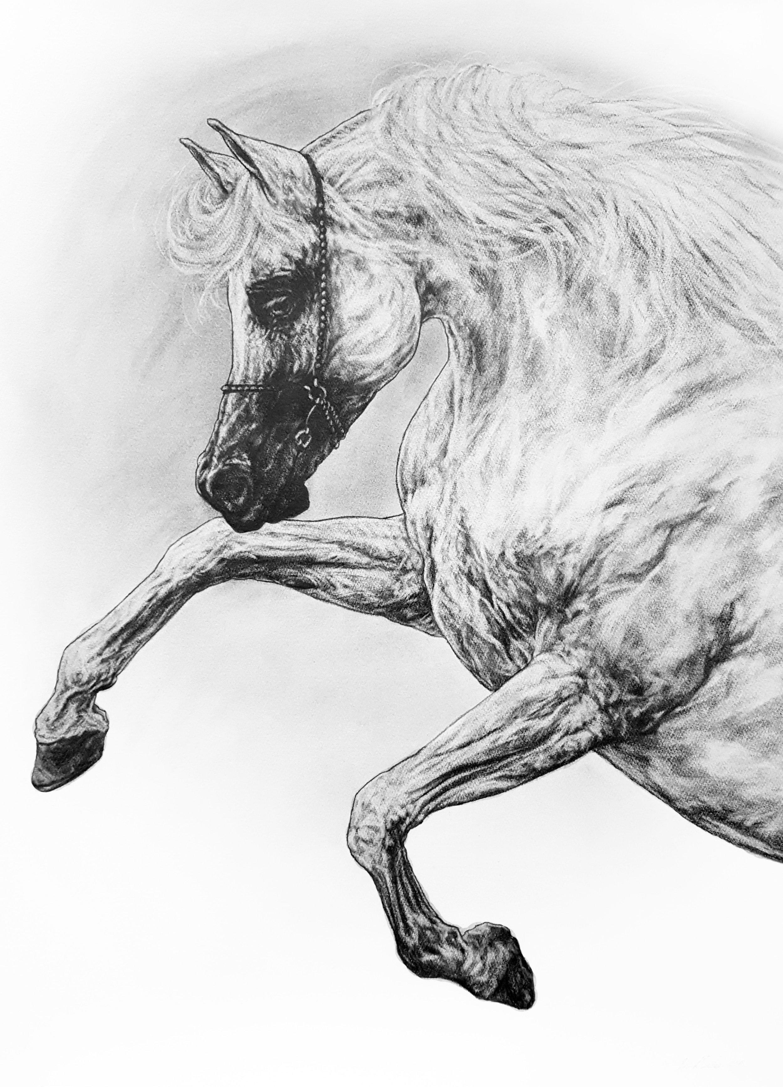 Study of a Stallion. 2018. Graphite on 300 GSM Fabriano Artistico Paper (76 x 56cm) UNAVAILABLE