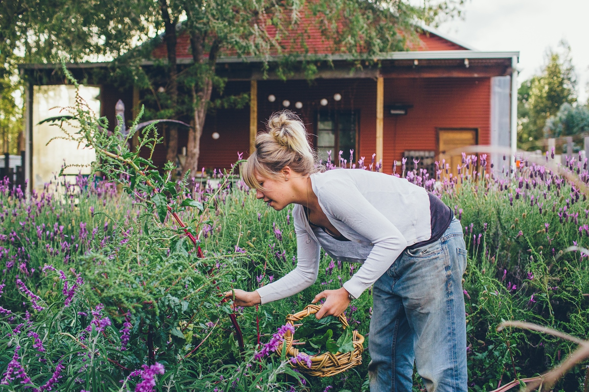 adeline lavender.jpg