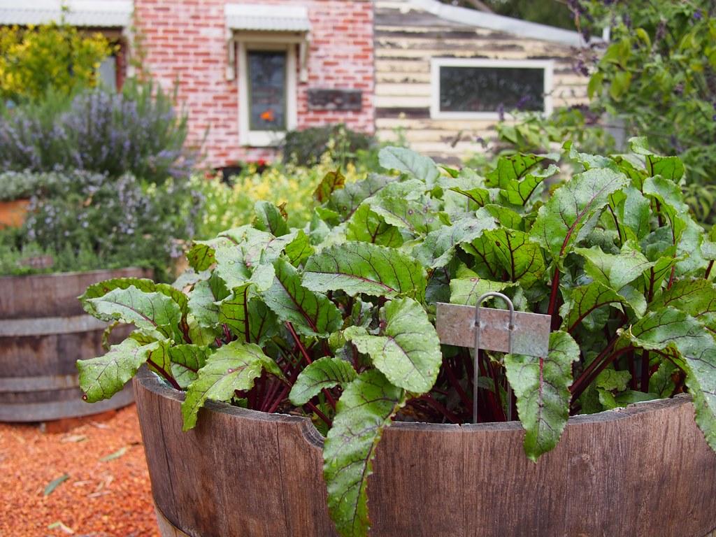 barrel garden.jpg