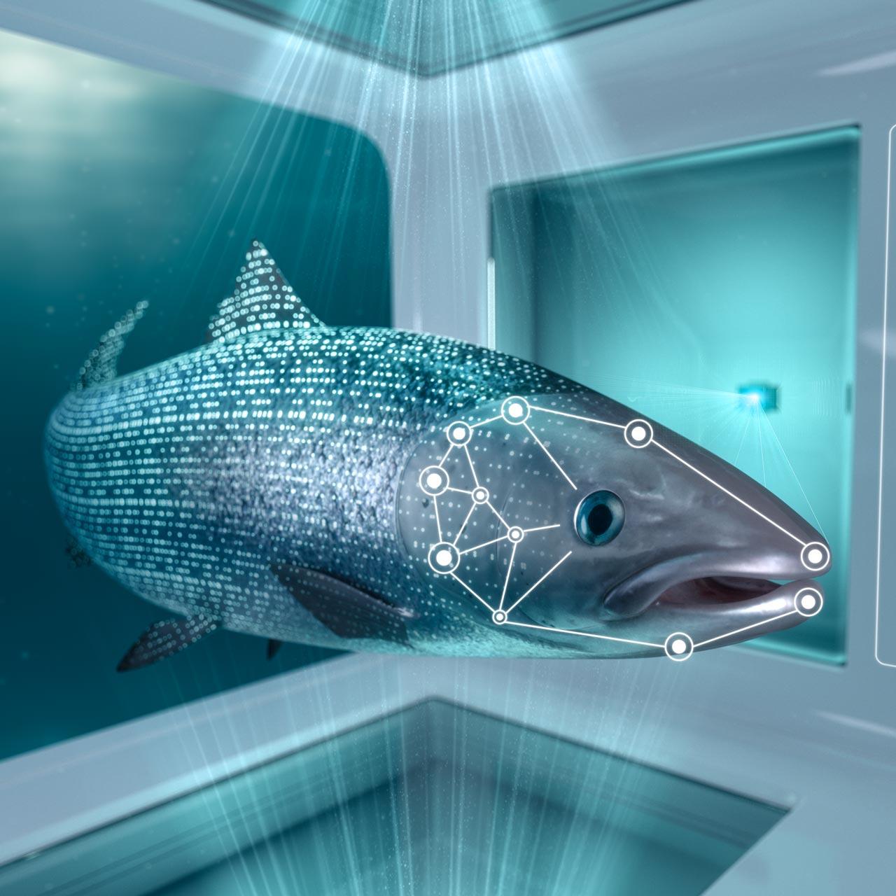 Fishbox05.jpg