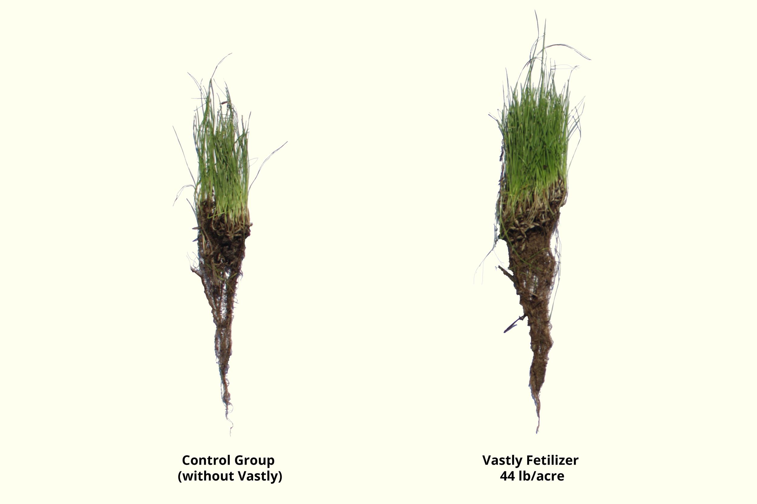 Granular Fertilizer.png