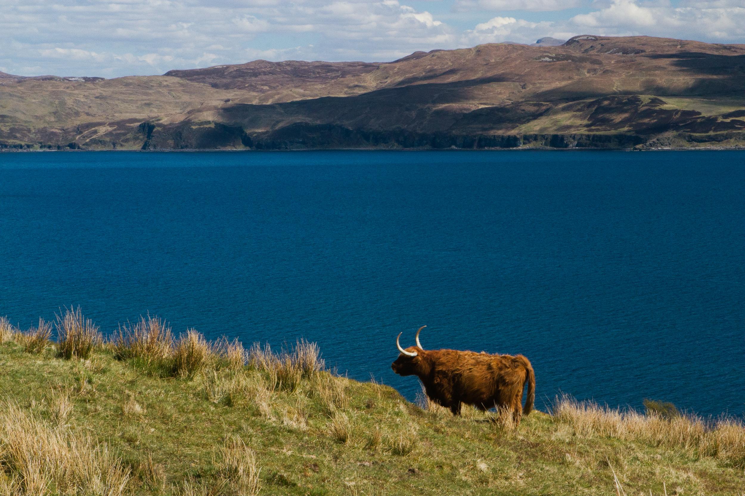 190423_Scotland-1749.jpg