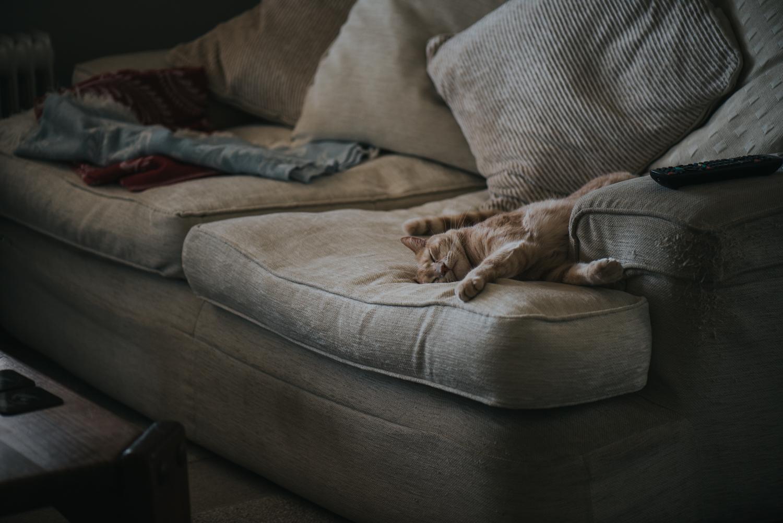 Brisbane Pet Photographer | Lifestyle Photography-1.jpg