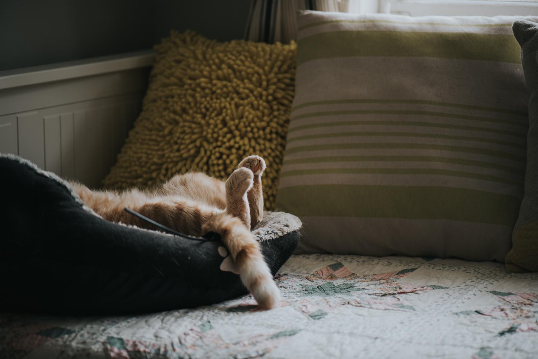 Brisbane Pet Photographer | Lifestyle Photography-6.jpg