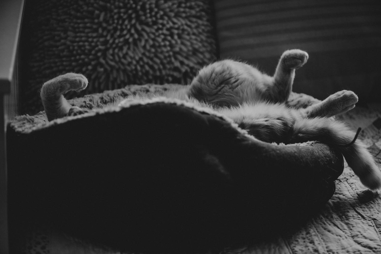 Brisbane Pet Photographer | Lifestyle Photography-9.jpg
