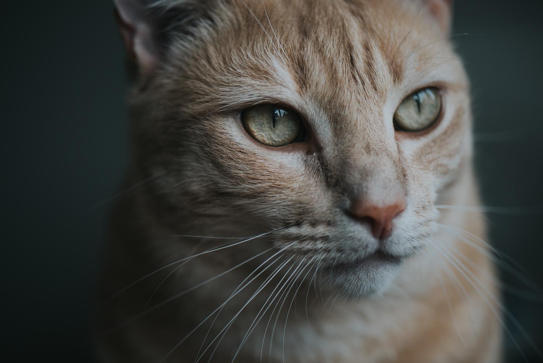 Brisbane Pet Photographer | Lifestyle Photography-12.jpg