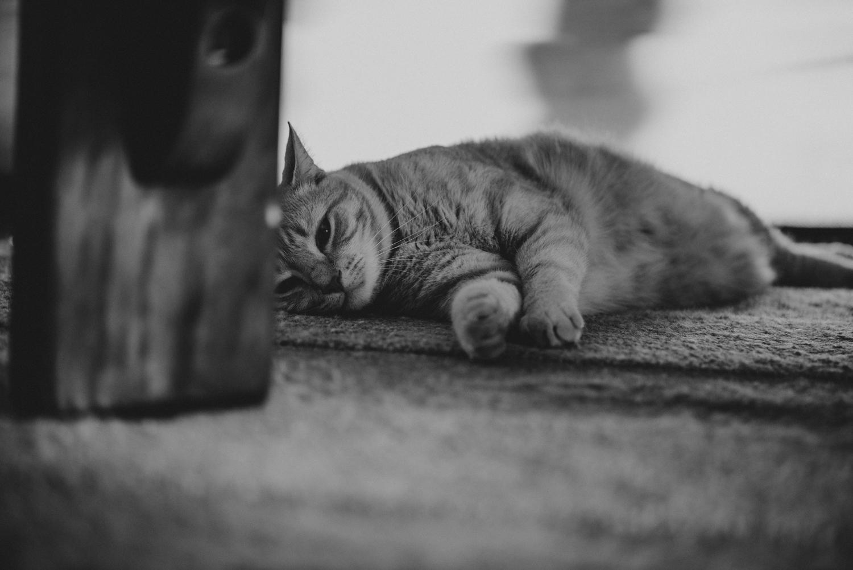 Brisbane Pet Photographer | Lifestyle Photography-15.jpg