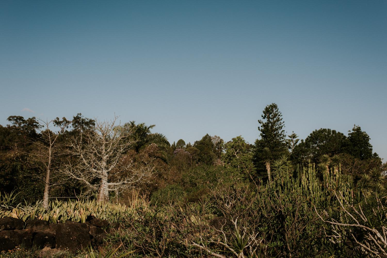 Brisbane Wedding Photographer | Engagement-Elopement Photography Botanical Gardens-1.jpg