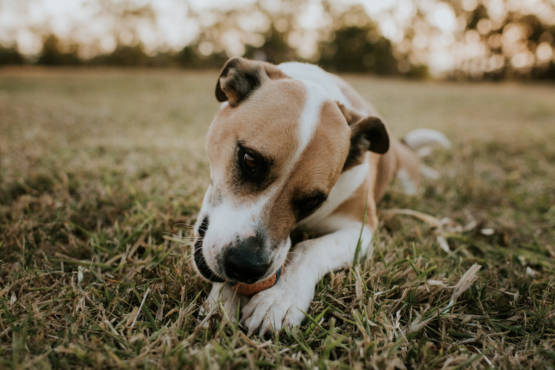 Brisbane Family Photographer | Pet Photography-11.jpg