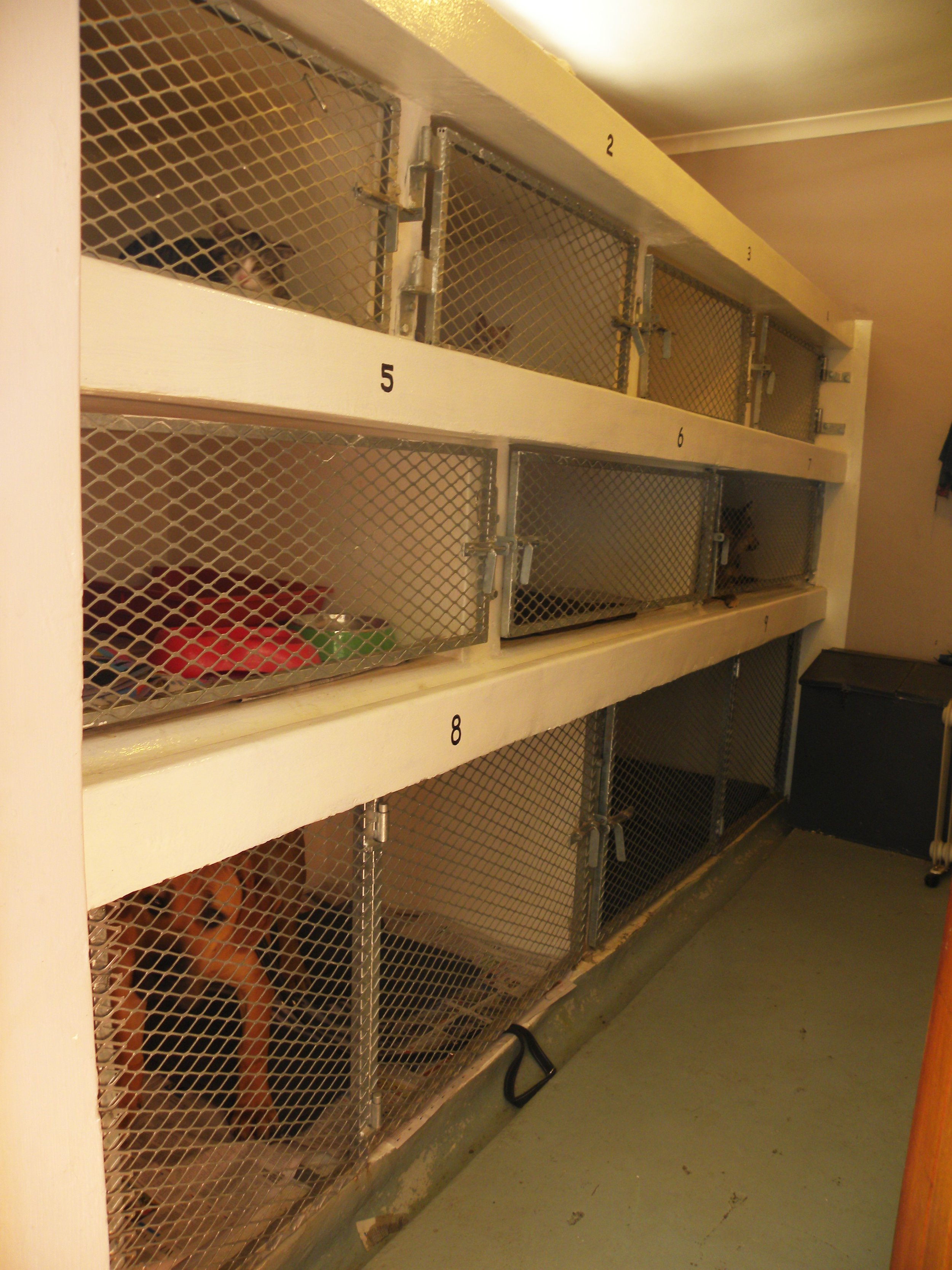 KENNELS WITH HEATER AND PADDED BEDDING