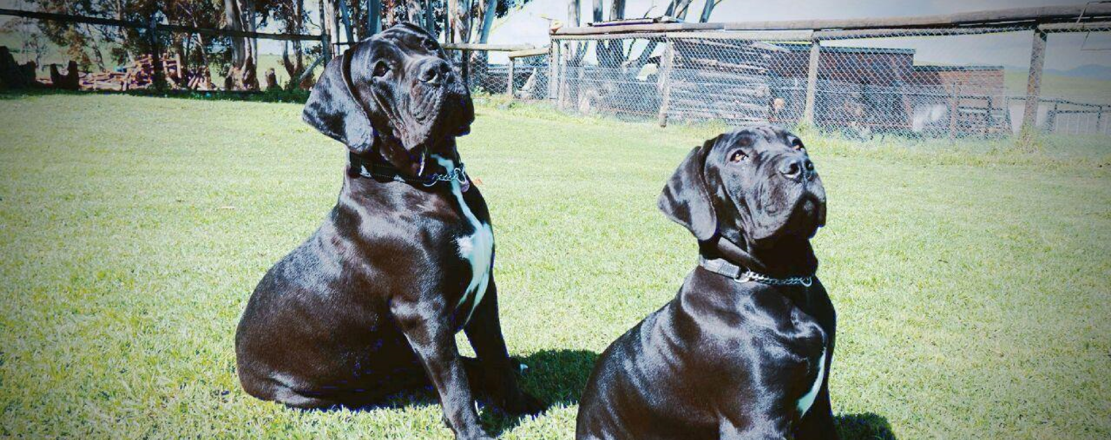 Overberg vet dogs3png.png