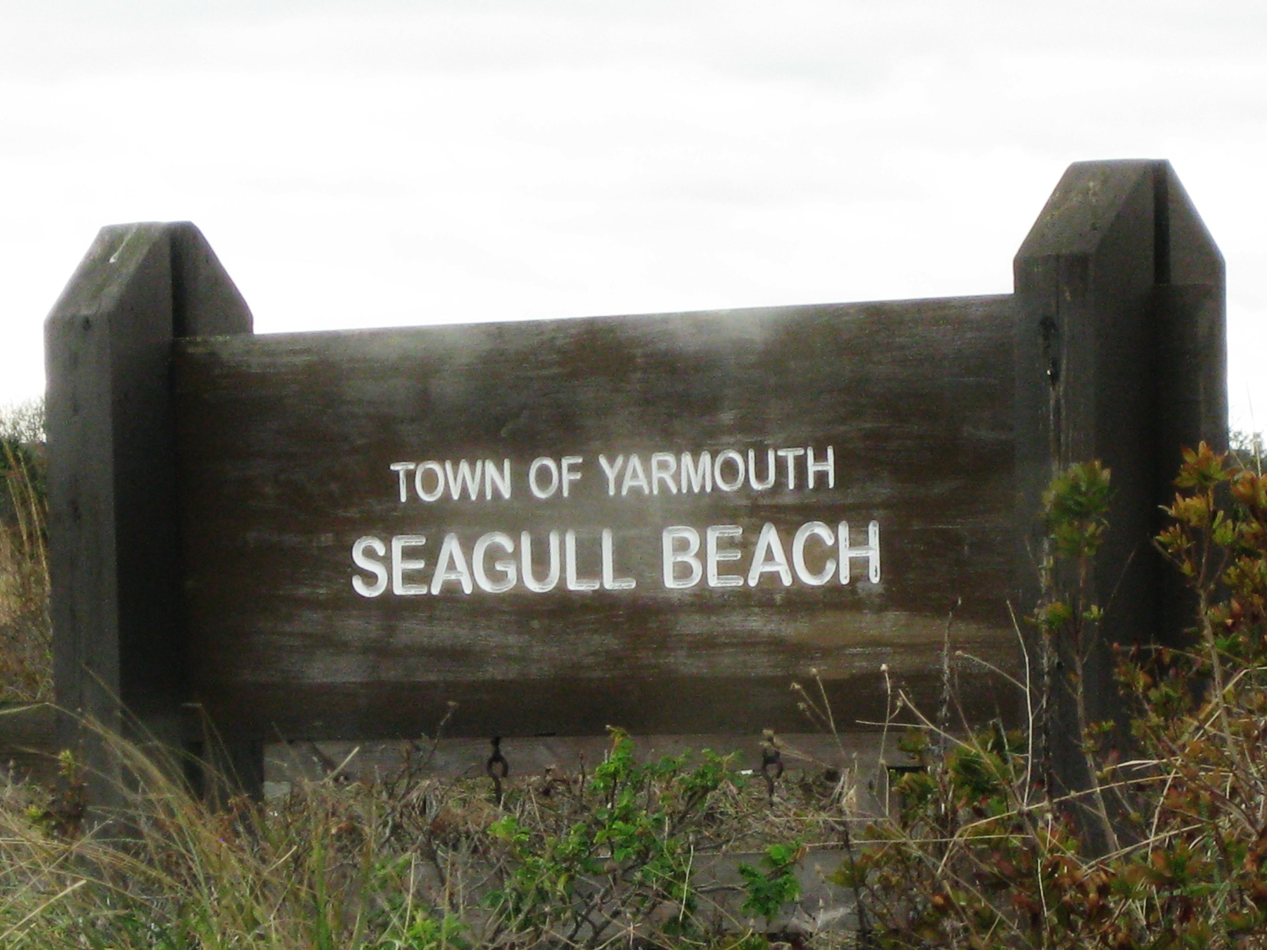 seagull beach- yarmouth,ma
