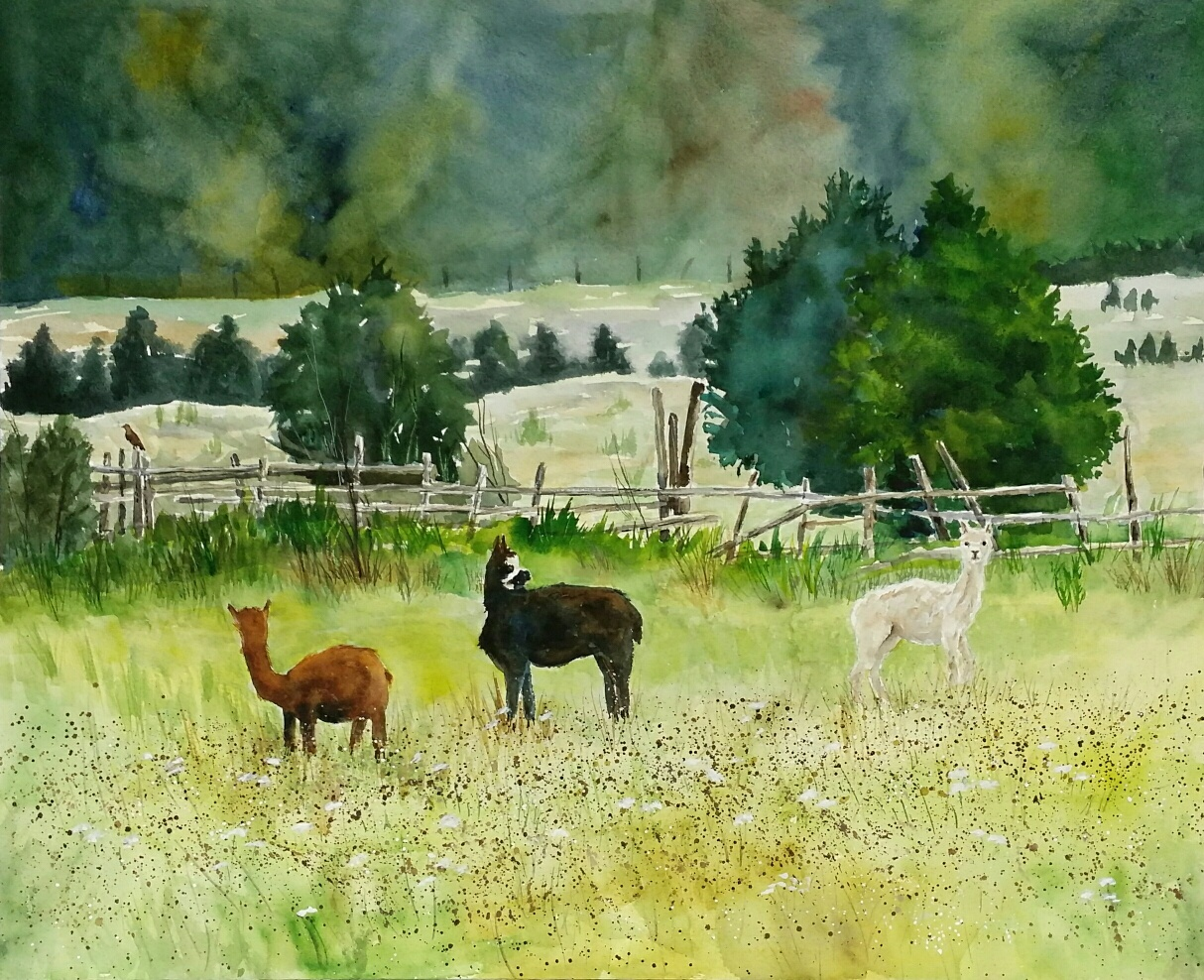 Field with Llamas