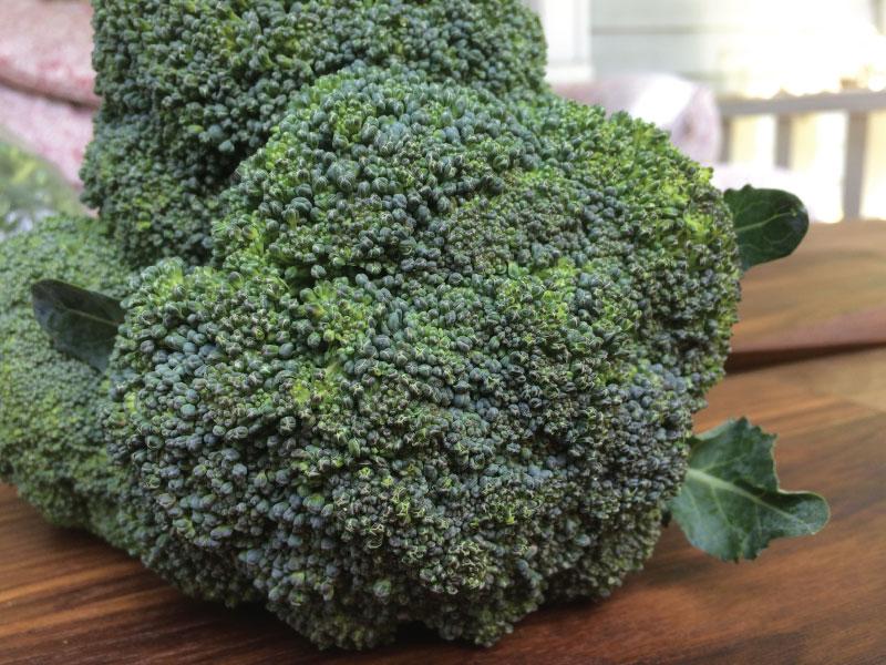 Broccoli1-web.jpg