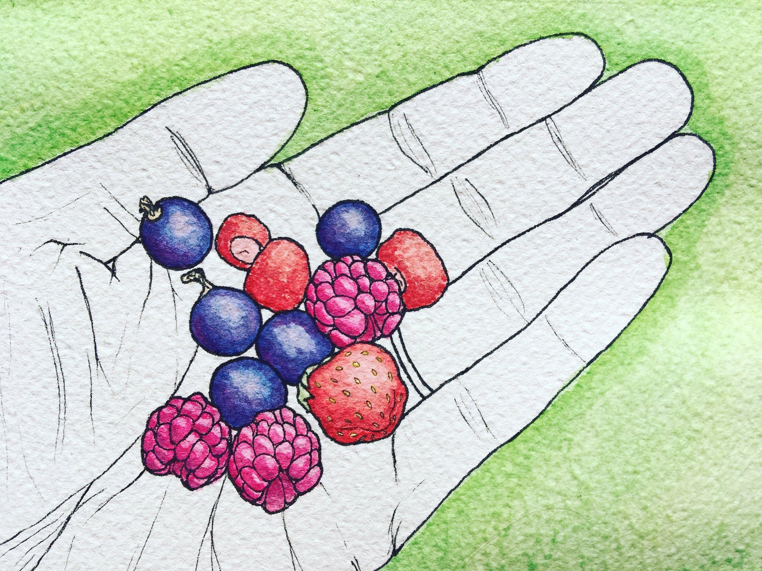 92_Backyard berries.JPG