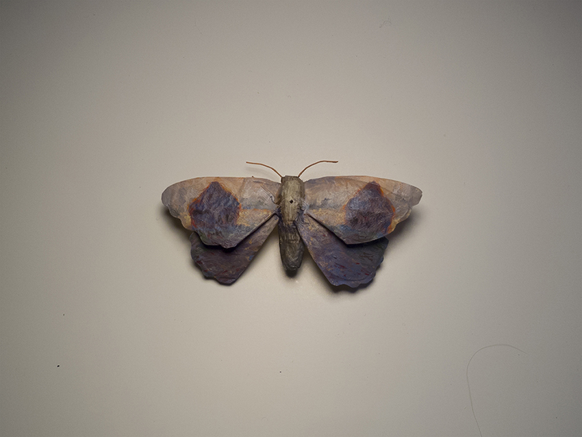 Moth No. 6 / Monet