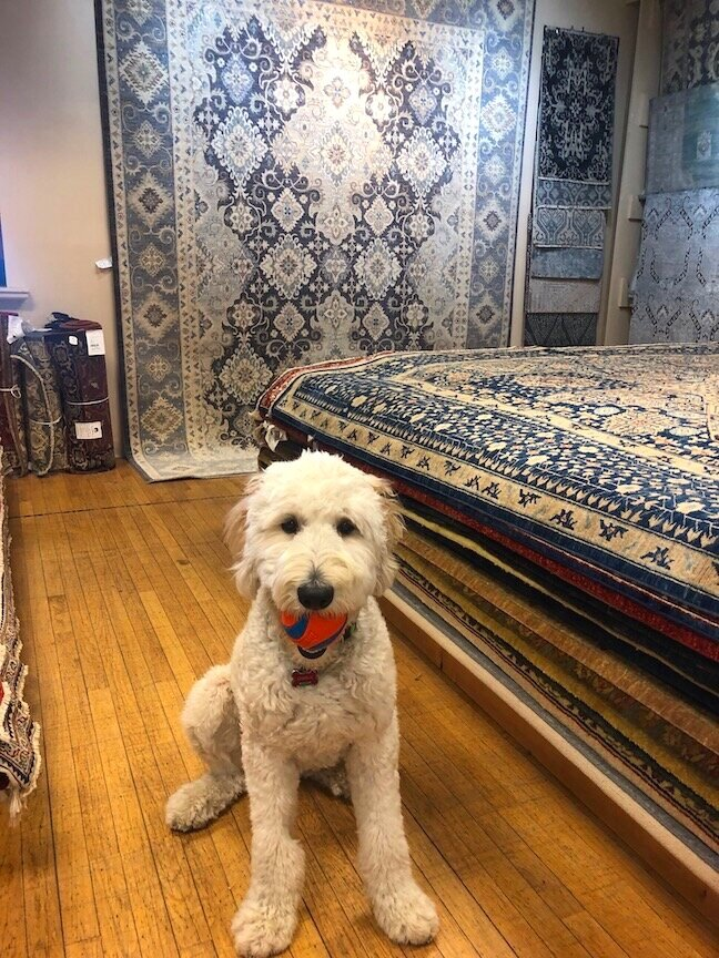 Charlie with a few transitional rugs in our showroom