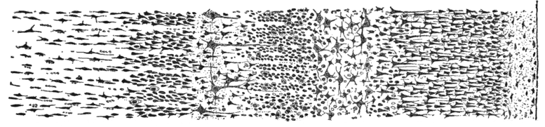 Cajal_cortex_drawings_1.png