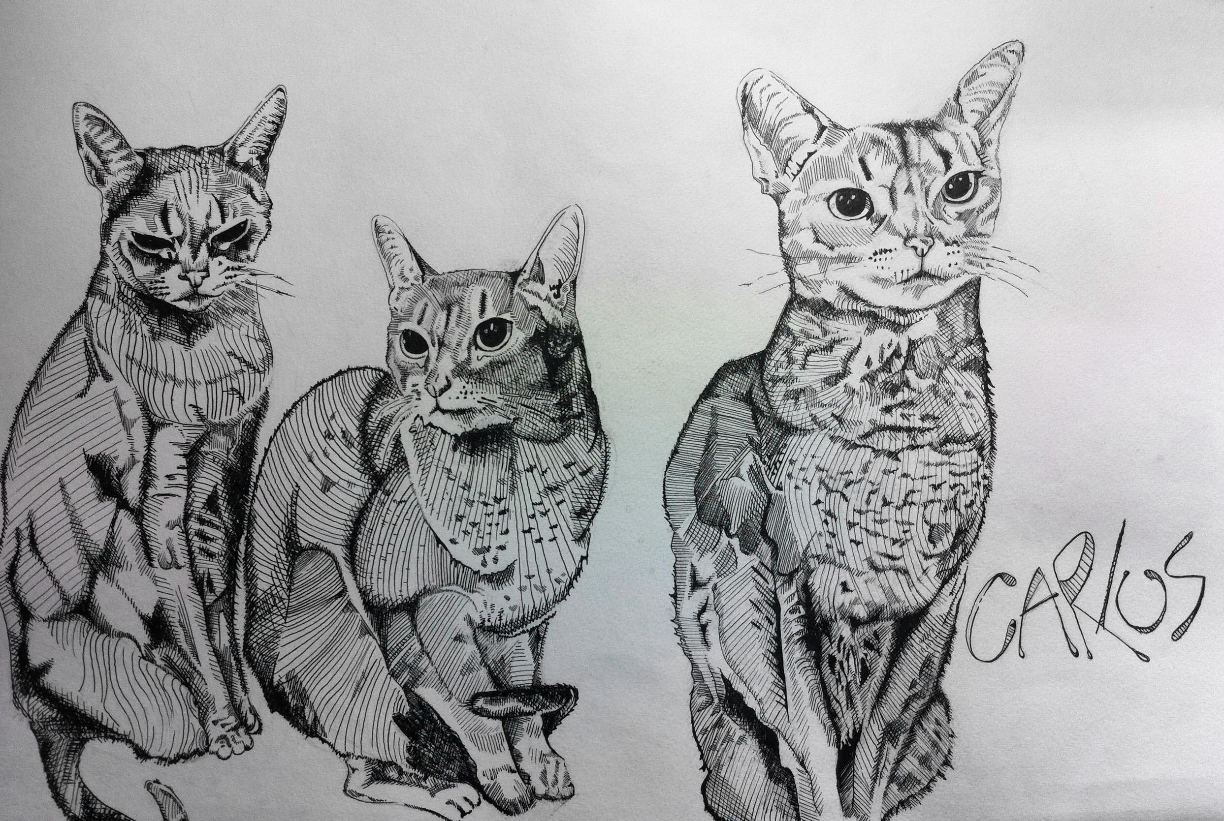 Gatos copy.jpg