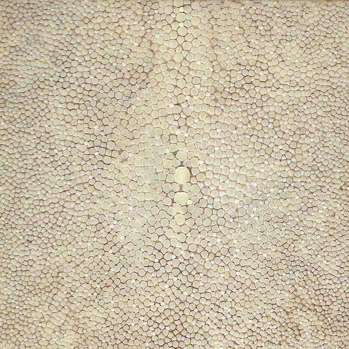 Speckled Oyster.png