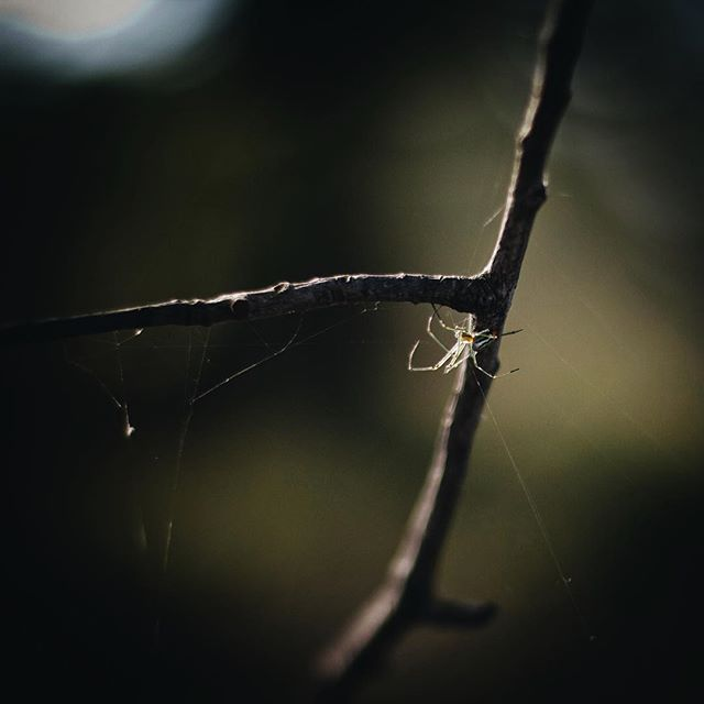 Itsy bitsy spider. #spider #macro #photography #nature #wildlife #bug #scenery