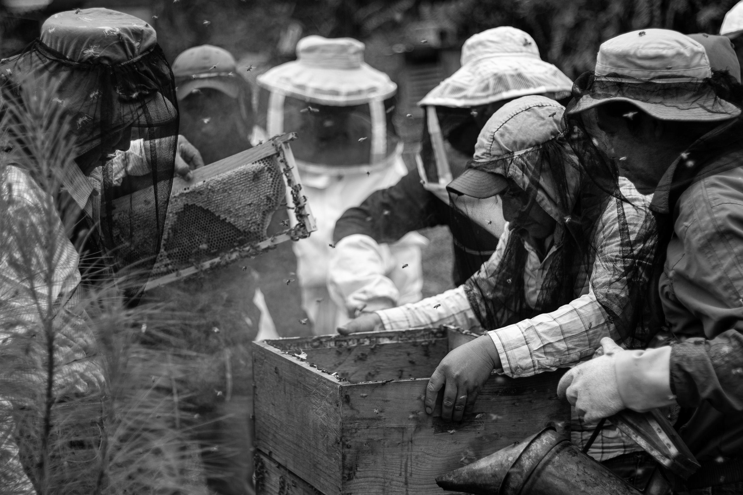 A beekeeping training in full swing.