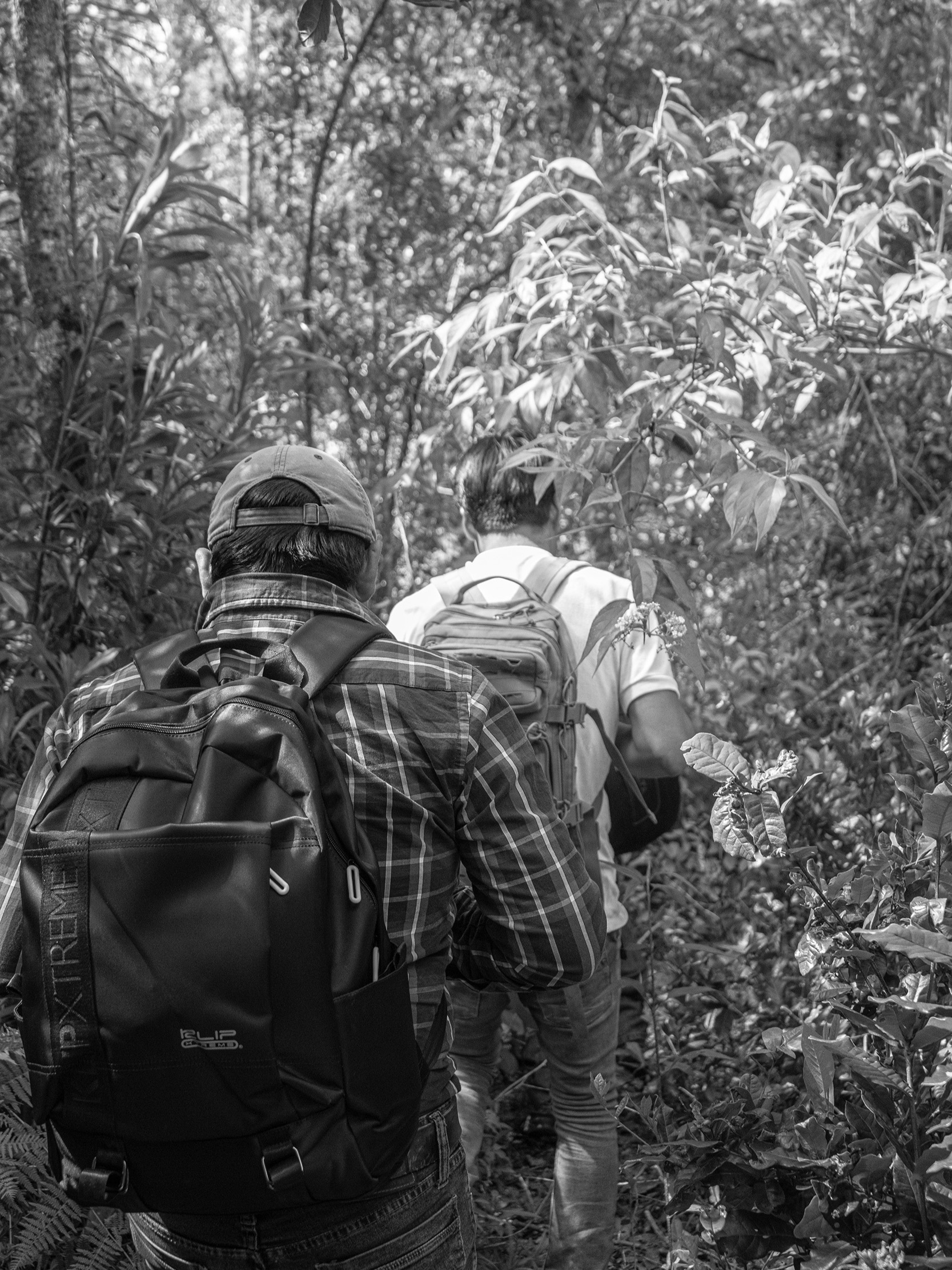 Trekking through thick brush to get to the hives.