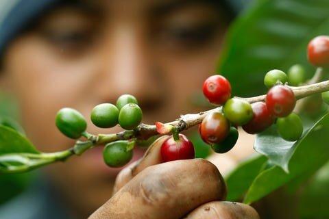 coffee beans .jpeg