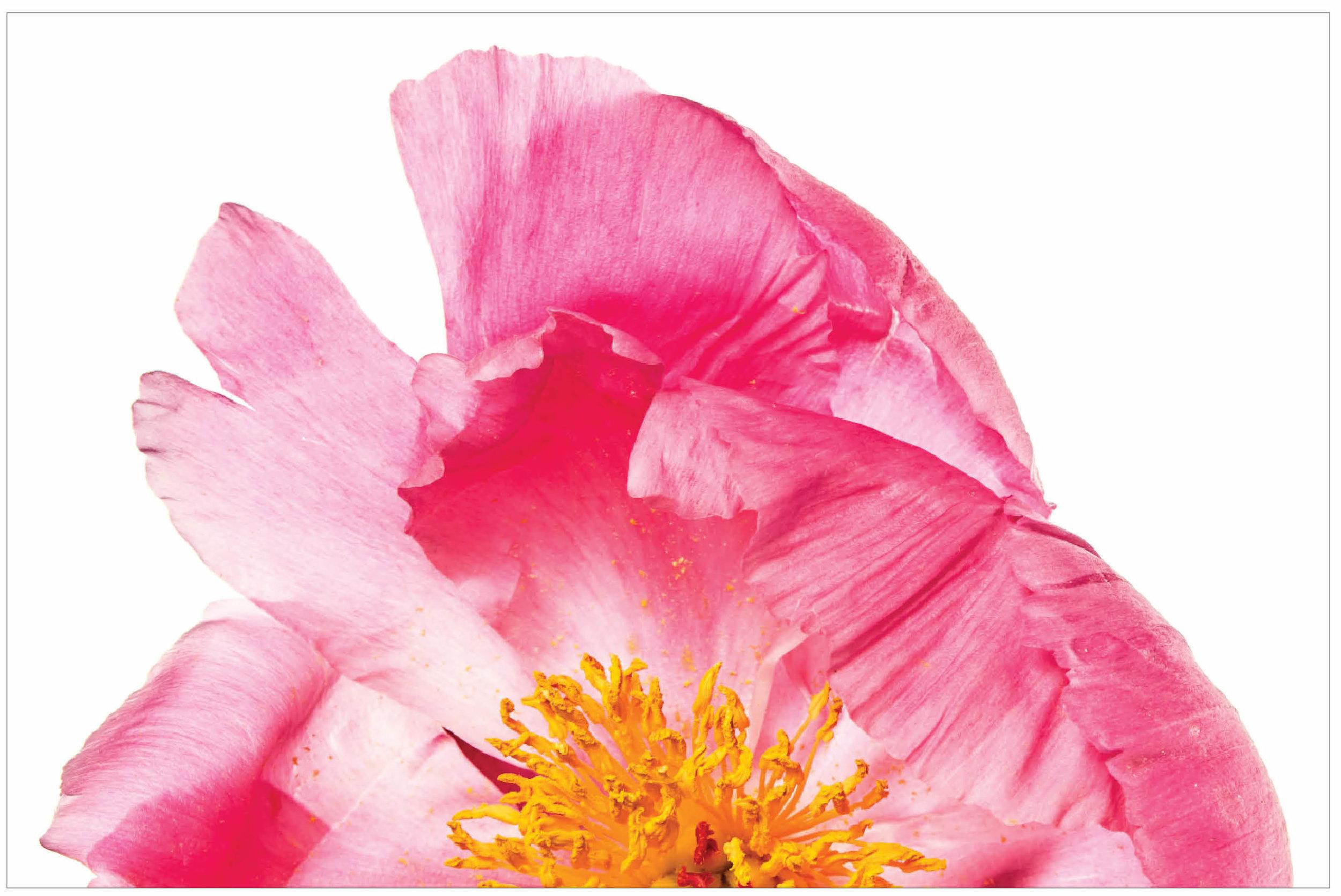 58 Flora.jpg