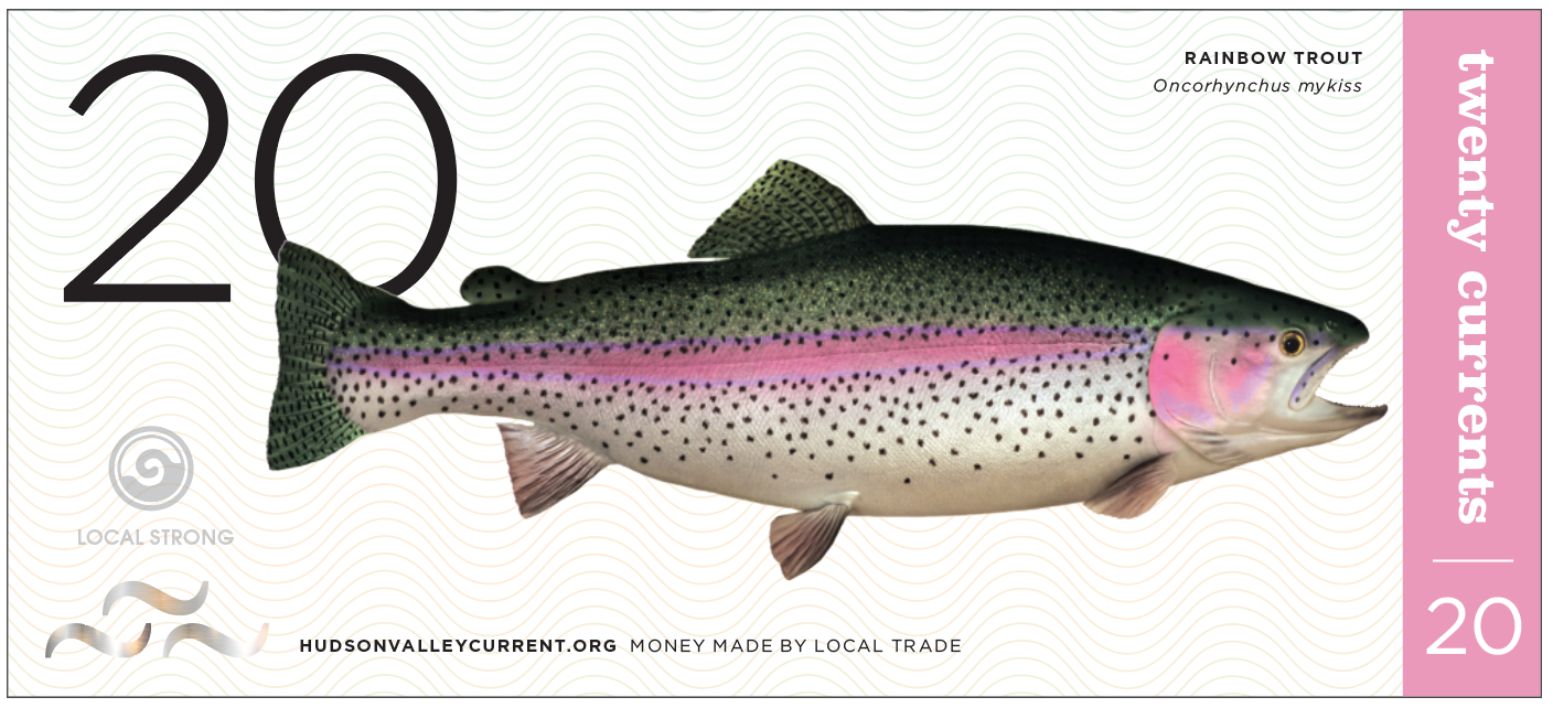 Hudson Valley Current Local Currency Money Design Monetary Bill Design Dollar Bill Carla Rozman Graphic Design Bumblebee Lizard Trout Fishing Hudson River Local Strong Melissa Hewitt 7 trout fishing hudson river fly fishing.png