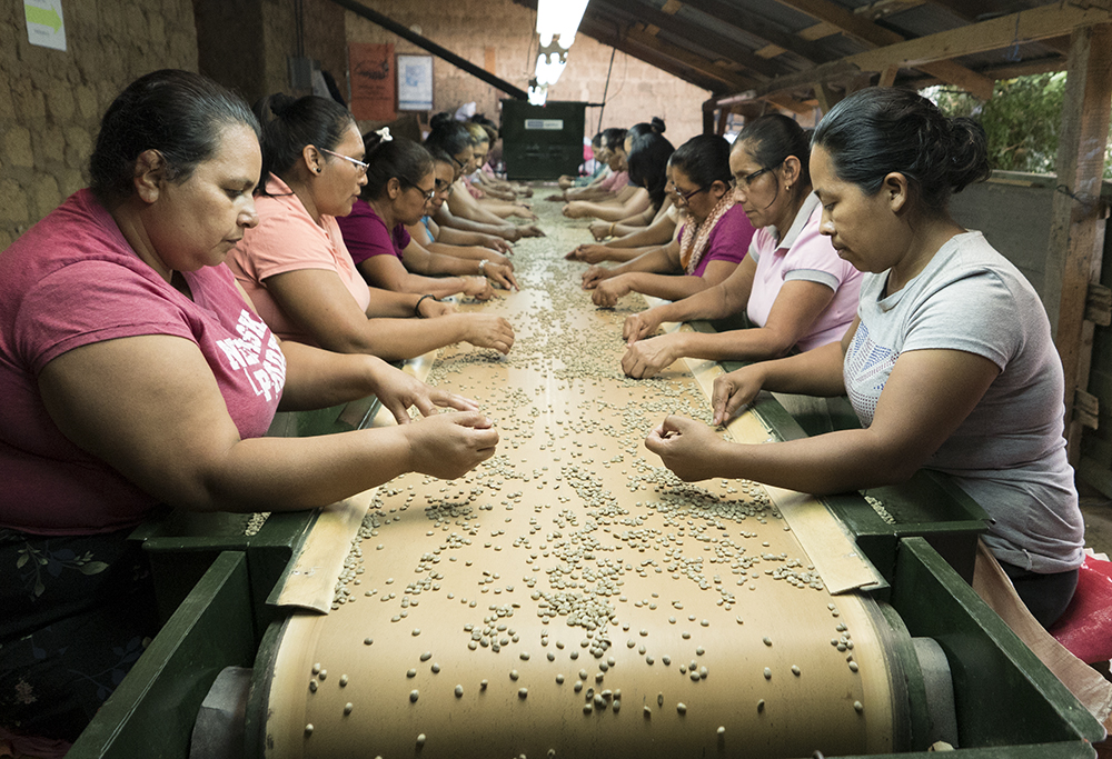 Workers look for coffee bean defects at the Lovo's mill