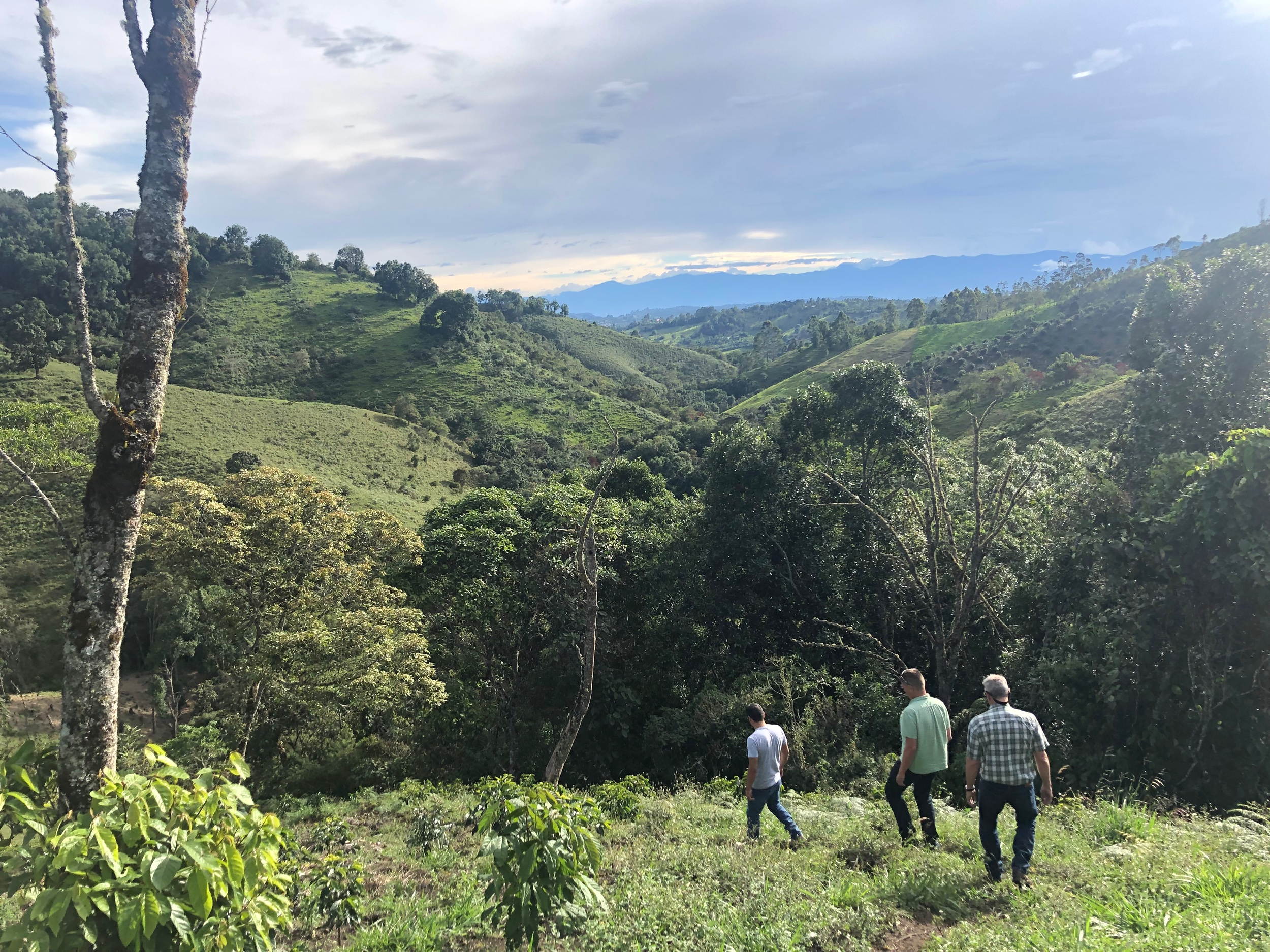We visited a coffee farm in Popayán (Southwest of Bogotá) & were greeted by one of our gracious host, Andreas. We checked out the current berries that were being prepared for processing plus more.