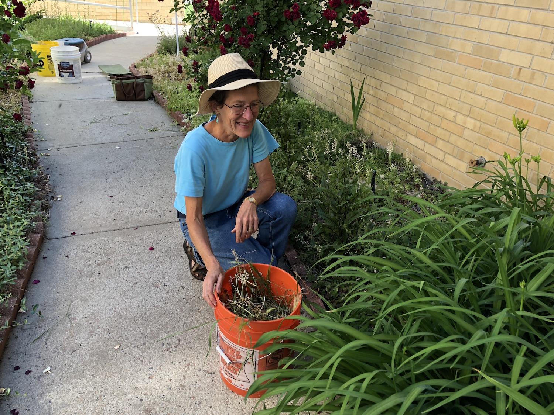 Sharon Kestrel weeding.JPG