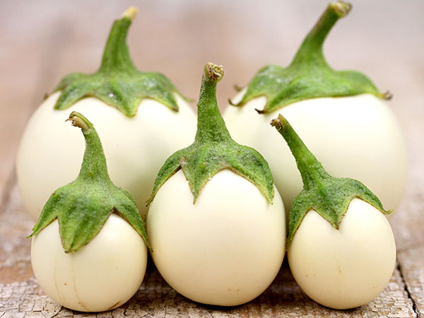 Lao White Eggplant from  Bakers Creek Heirloom Seeds