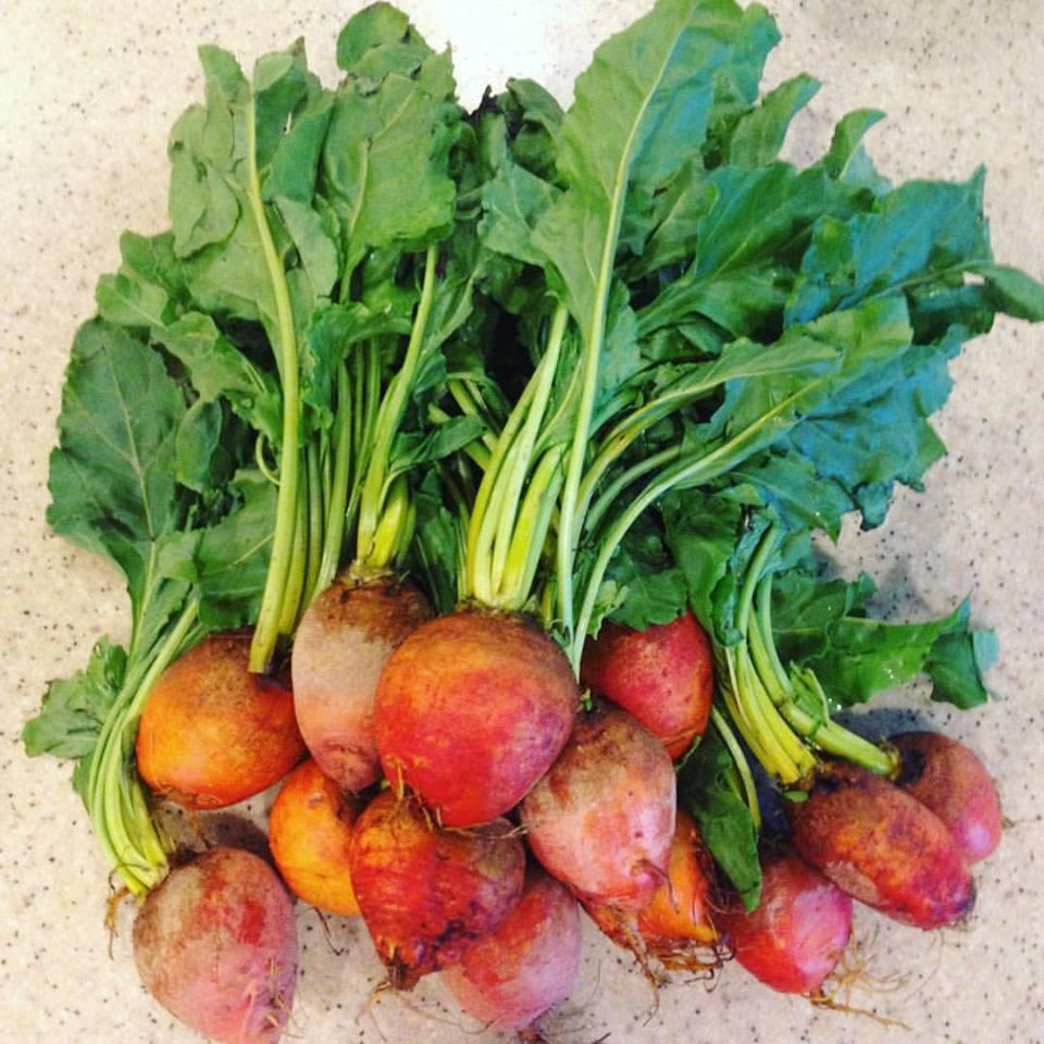 i dig some fresh beets! -