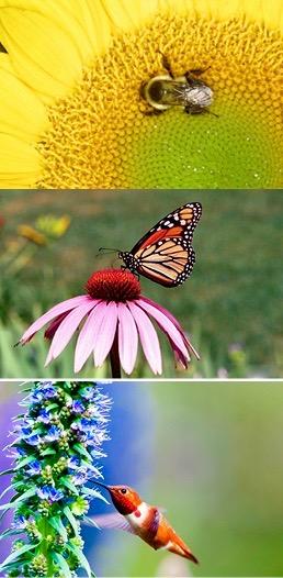 Flickr CC photos: Danny Perez, 2010; Bill Millhouser, 2001; USDA, 2014.