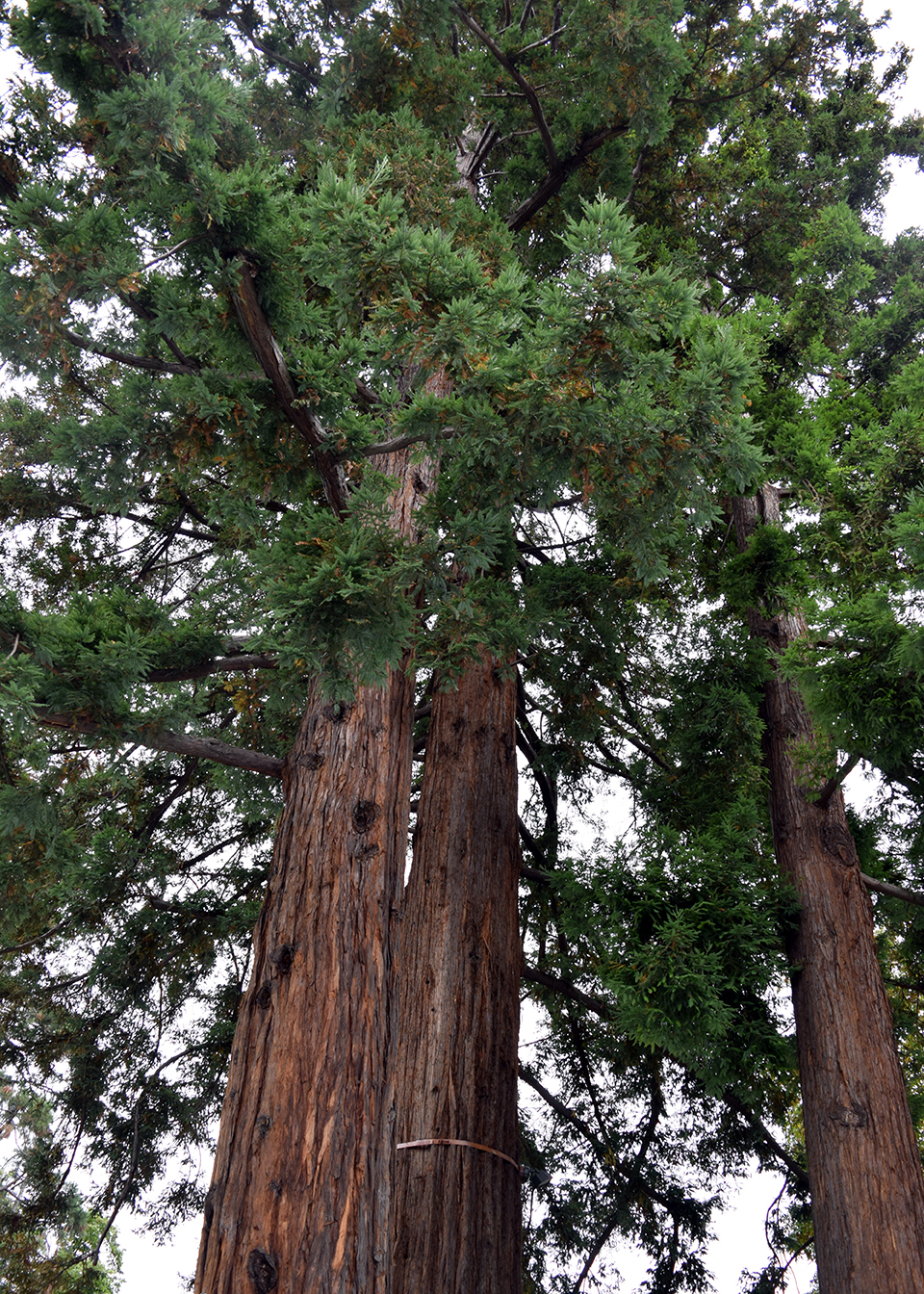 Exterior: redwood trees