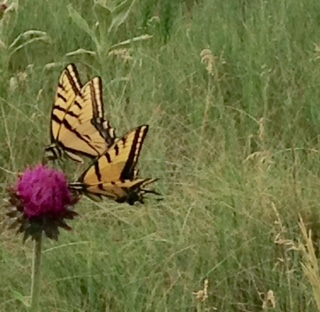 butterflies on weed.jpg
