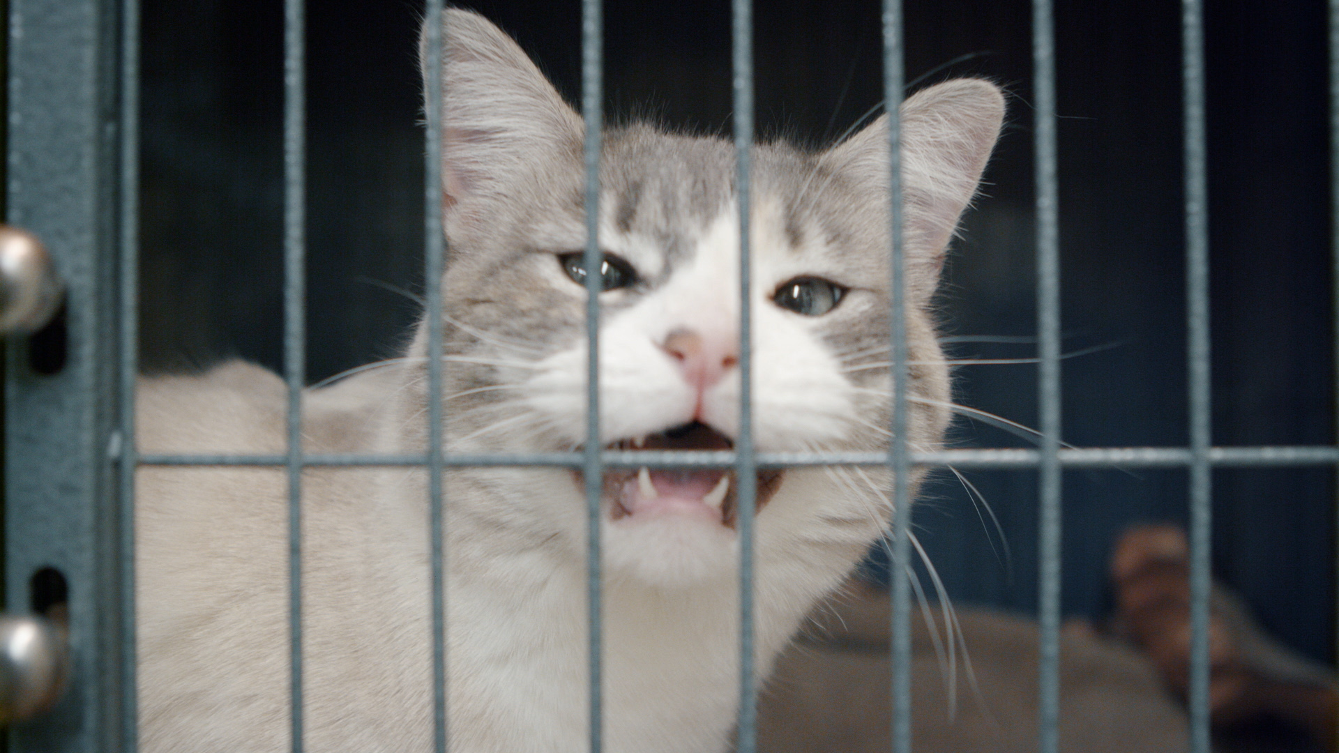 - We can create lasting change and save hundreds of lives by bringing in animals that would otherwise be killed in overcrowded shelters and connect them with forever homes.