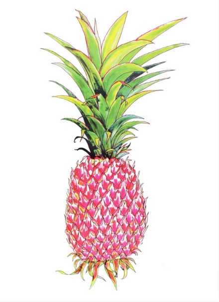 Affordable art prints to buy online - Pink Pineapple by Andy Macgregor at The Print Shop.